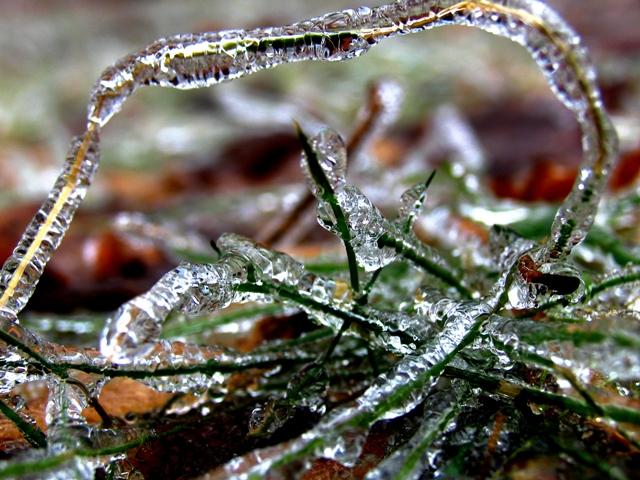 Ice Storm13