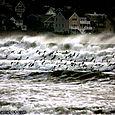 Newport Waves