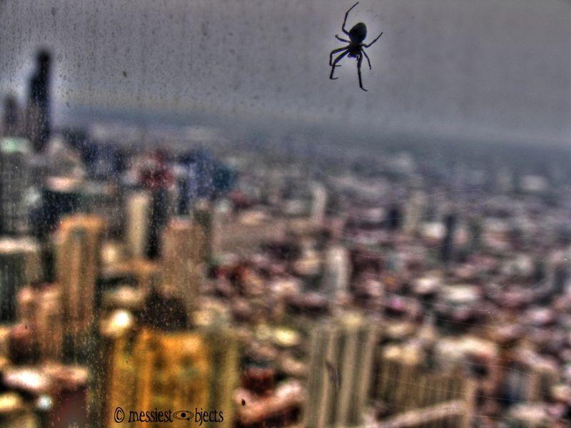 Spider's View2