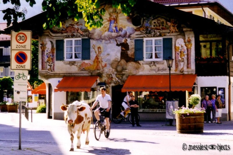 Bavarian on a Bike and herding a cow... downtown