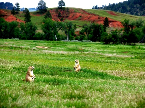 Devils_tower_24_prarie_dog_town
