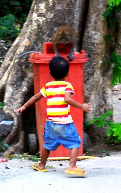 Boy_shocked_by_the_monkey